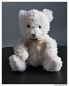 "White 10-12"" sitting bear with gold bow - I have lost a white bear with gold bow and embroidered nose.  He is sitting, but his limbs are floppy.  I originally purchased him in 2005 or 2006 in front of a grocery store in Queens, NY to support a charity.  Thank you for any help in finding a replacement!"