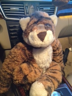 Help Find This Tiger