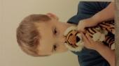 lost small tiger