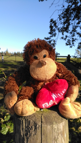 """Brown monkey with red """"be mines"""" heart"""