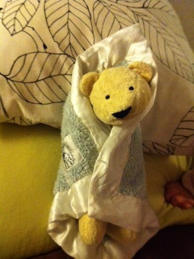 Yellow Bear missing in Hawaii