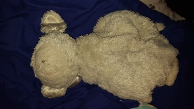 Well-loved formerly white, now greyish sheep