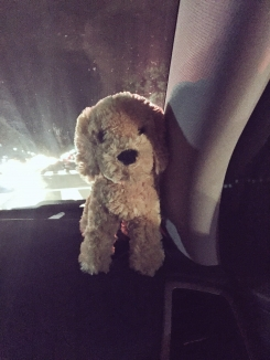 Heath's dog
