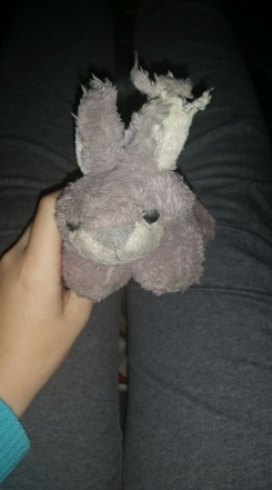 Grey bunny, well loved