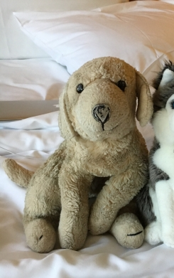 """12"""" yellow lab (grayish now) Well loved  Min stuffing in middle"""