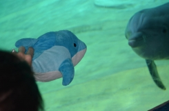 Blue Dolphin with white stitches on head and floppy tail