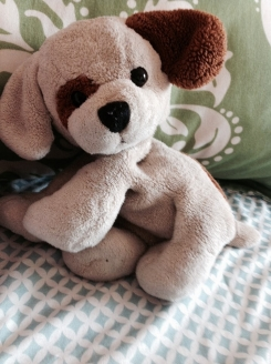 Cream and brown beanie dog