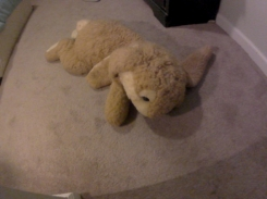 Giant Bunny with Brown/Tan and White fur and Rainbow Ribbon around neck.