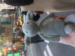 Small gray Lamb found in Times Square