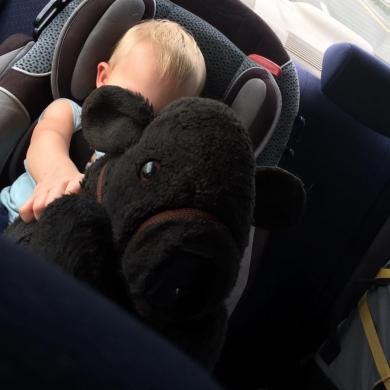 Black Stuffed Cow puppet