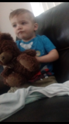 Brown bear with plaid bow,  lost and my sons a mess without it.  We're can I find another