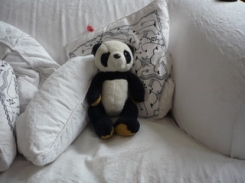 Panda with brown paws and longish legs