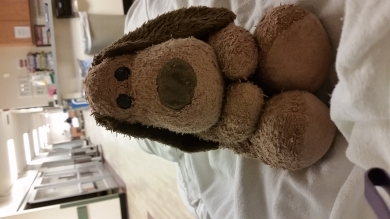 Lost Brown Bear With Bonnet And Shirtlong Tan Dog With