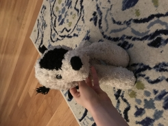 White dog with Black spot on back and over eye and long black ears.