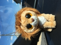New TY lion, small with big eyes. Called King.