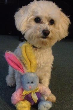 Colorful stuffed Bunny