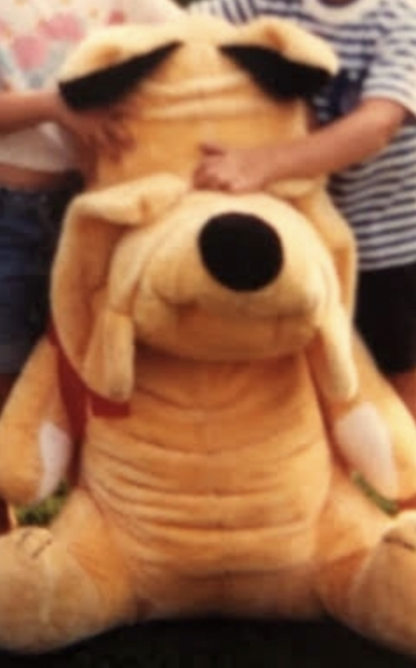 Golden full grown approximately 2ft or larger shar-pei dog