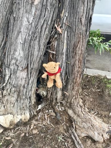 Scraggly little Pooh Bear