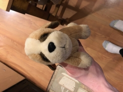 light brown stuffed dog with dark brown ears and white paws